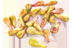 hroznová semena